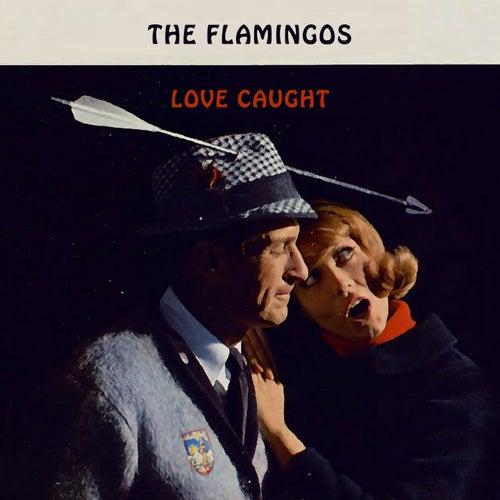 Love Caught von The Flamingos