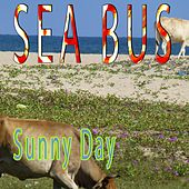 Sunny Day by Sea Bus