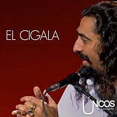 Play & Download Únicos en Concierto. Diego el Cigala (En Directo) by Diego El Cigala | Napster
