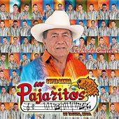 Play & Download Te He de Querer by Los Pajaritos De Tacupa | Napster