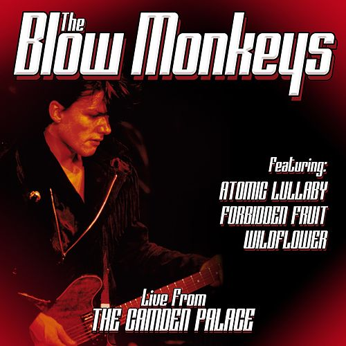Play & Download Live From London by The Blow Monkeys | Napster