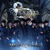 Play & Download Amor Que Nace by Alacranes Musical | Napster