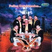 Play & Download Pollos Desplumados by Grupo Accion Oaxaca | Napster