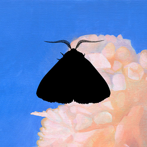 Moth to the Flame (Whatever/Whatever Remix) by Chairlift