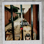 Black Dogs by Boys Night Out