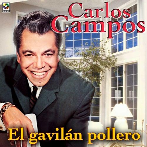 Resultado de imagen para Carlos campos El Gavilan Pollero