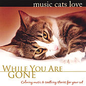 Play & Download Music Cats Love: While You Are Gone by Bradley Joseph | Napster