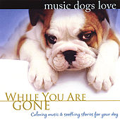 Play & Download Music Dogs Love: While You Are Gone by Bradley Joseph | Napster
