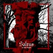 W Imię Bogów by Saltus