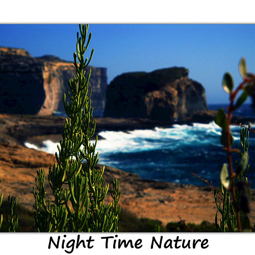 Night Time Nature by Blue Moon