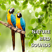 Nature Bird Sounds by Bird Sounds