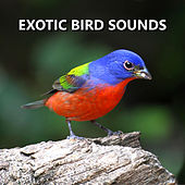 Exotic Bird Sounds by Bird Sounds