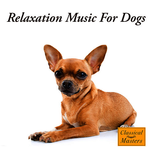 Play & Download Relaxation Music For Dogs by The Dog Whisperer Band | Napster