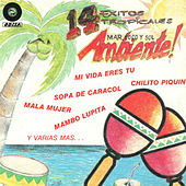 Play & Download 14 Exitos Tropicales by Various Artists | Napster
