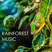 Play & Download Rainforest Music - The Very Best Collection of Nature's Lullabies, Soothing Soundscapes for Deep Sleep by Rainforest Music Lullabies Ensemble | Napster