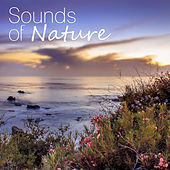 Play & Download Sounds of Nature – Ambient Nature Sounds for Relax, Meditation, Sleep by Sounds of Nature Relaxation | Napster