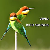 Vivid Bird Sounds by Bird Sounds