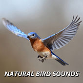 Natural Bird Sounds by Bird Sounds