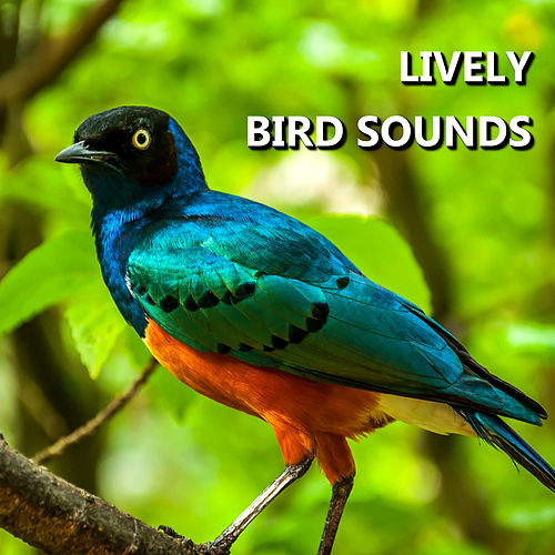 Play & Download Lively Bird Sounds by Bird Sounds | Napster