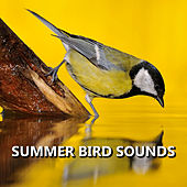 Summer Bird Sounds by Bird Sounds