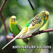 Bird Nature Sounds by Bird Sounds