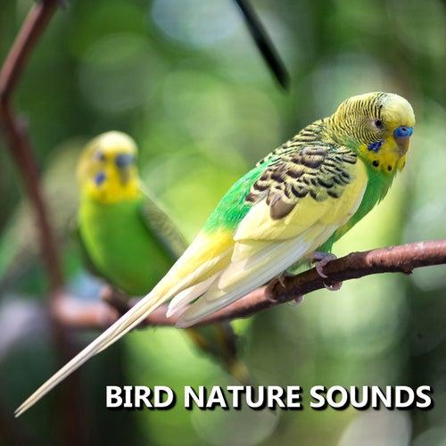Bird Nature Sounds by Bird Sounds