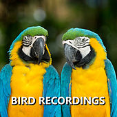 Bird Recordings by Bird Sounds