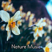Play & Download Nature Music - Ambient Sounds of Nature, Water Sounds for Relax by Nature Tribe | Napster
