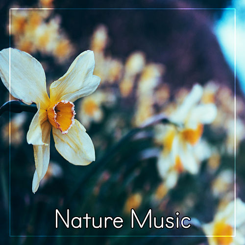 Nature Music - Ambient Sounds of Nature, Water Sounds for Relax by Nature Tribe