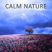Play & Download Calm Nature – Ocean, Sounds of Nature, Relaxation, Birds, Calm Music, Soft Nature by Sounds of Nature Relaxation | Napster