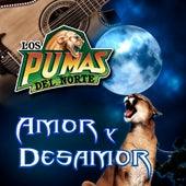 Play & Download Amoy Y Desamor by Los Pumas Del Norte | Napster