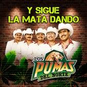 Play & Download Y Sigue La Mata Dando by Los Pumas Del Norte | Napster