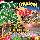 Play & Download Navidad Tropical a Bailar by Various Artists | Napster
