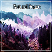 Play & Download Natural Peace – Slow Waves, Natural Immersion, Sleepy Sounds, Peaceful Music by Organic Sound | Napster