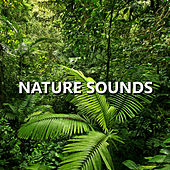 Nature Sounds by Nature Sounds Nature Music