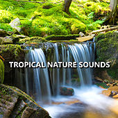 Tropical Nature Sounds by Nature Sounds Nature Music