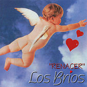 Play & Download Renacer by Los Brios | Napster