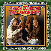 Puros Corridos Malandrines Vol. 1 by Various Artists