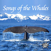 Songs Of The Whales by Nature Project