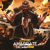 Play & Download Amarrate las Timber (feat. Almighty) (Remix) by Farruko | Napster