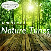 Play & Download Ambient Nature Tunes by Various Artists | Napster