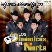 Play & Download Seguimos Arremangando by Los Dinamicos Del Norte | Napster
