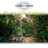Play & Download Rhythm of the Rainforest by Chakra's Dream | Napster