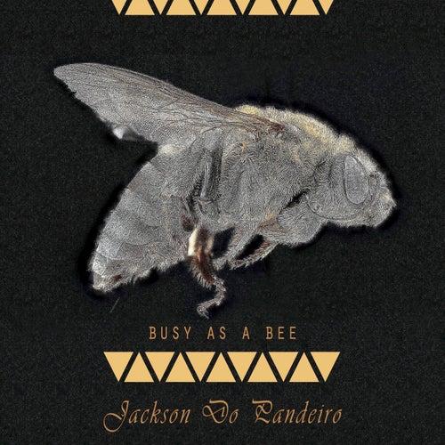 Busy As A Bee de Jackson Do Pandeiro