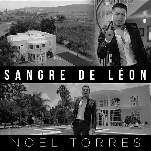 Play & Download Sangre de Léon by Noel Torres | Napster