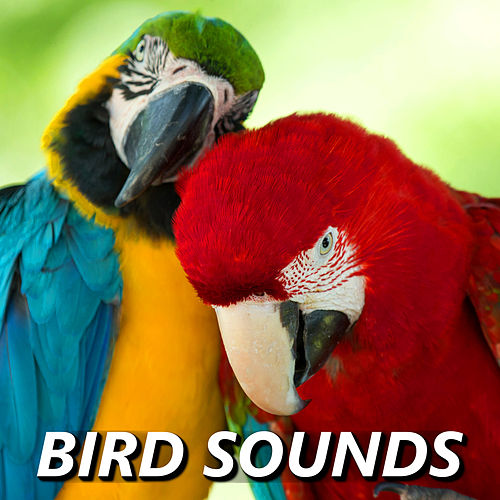 Play & Download Bird Sounds by Bird Sounds | Napster