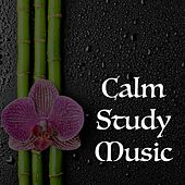 Play & Download Calm Study Music by Study Focus | Napster
