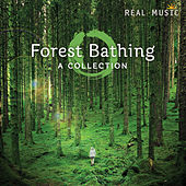 Play & Download Forest Bathing by Various Artists | Napster