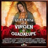 Serenata a la Virgen de Guadalupe by Various Artists