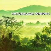 Naturaleza Sonidos de Naturaleza Sonidos